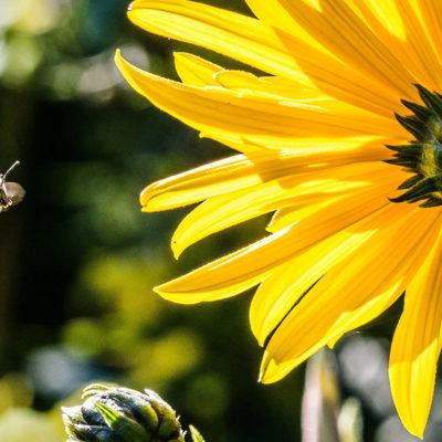 Karin Gümmer - Mama Coaching im Bienenhaus: Timeout statt Burnout-Beratung