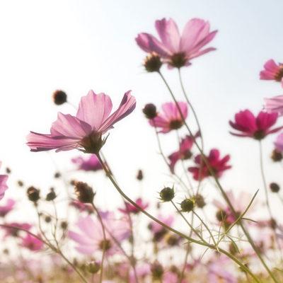 Slider Wiesenblumen